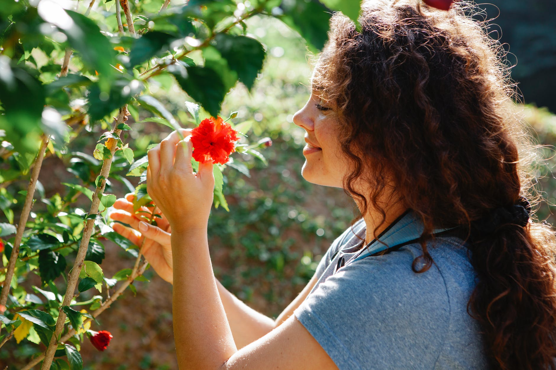 smiling woman touching bright blooming hibiscus on shrub